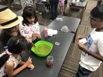 Making blueberry Gelatin bubbles 7
