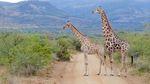 Safari in South Africa by Caroline Sage