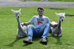 Agrodome Alpacas by Myles Joyce